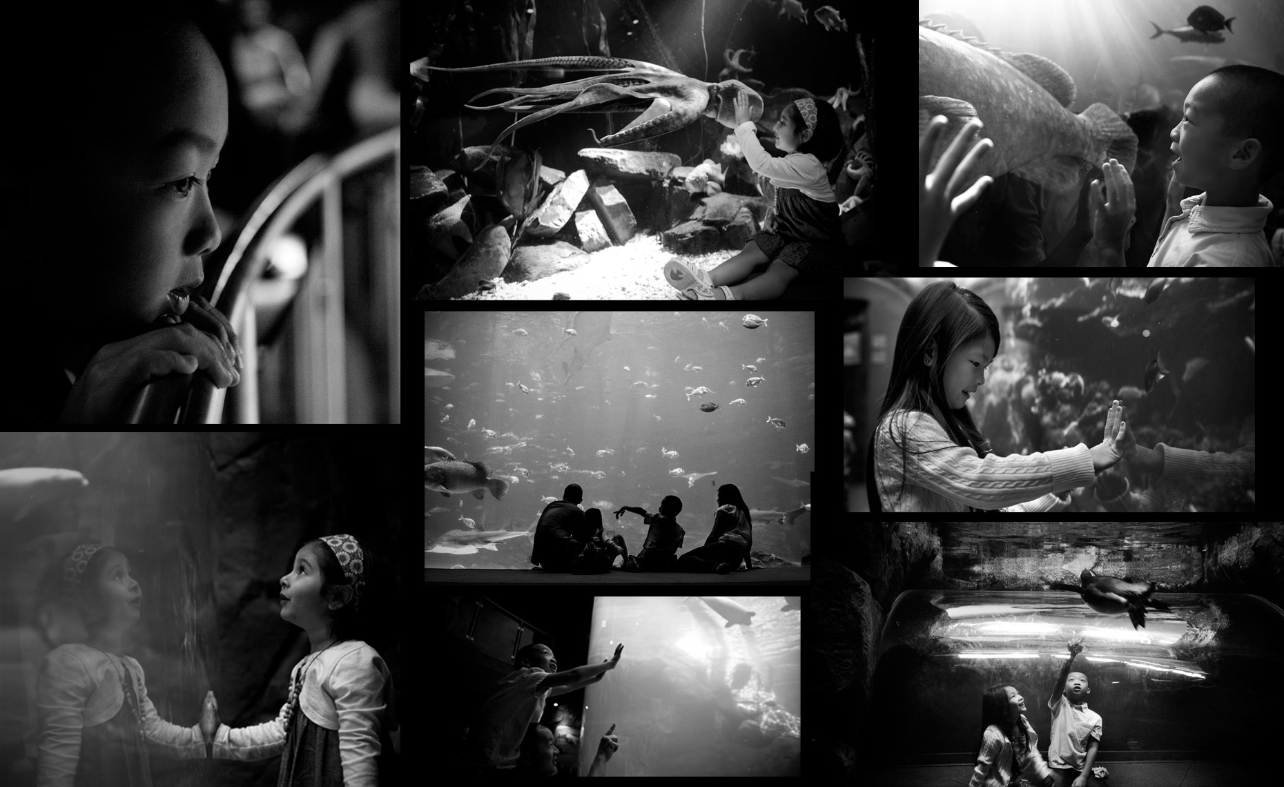 1-Promethean_aqua_collage